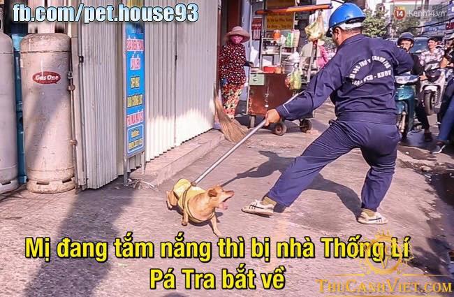hình ảnh những chú chó chạy ngoài đường bị vợt một cách khá phản cảm