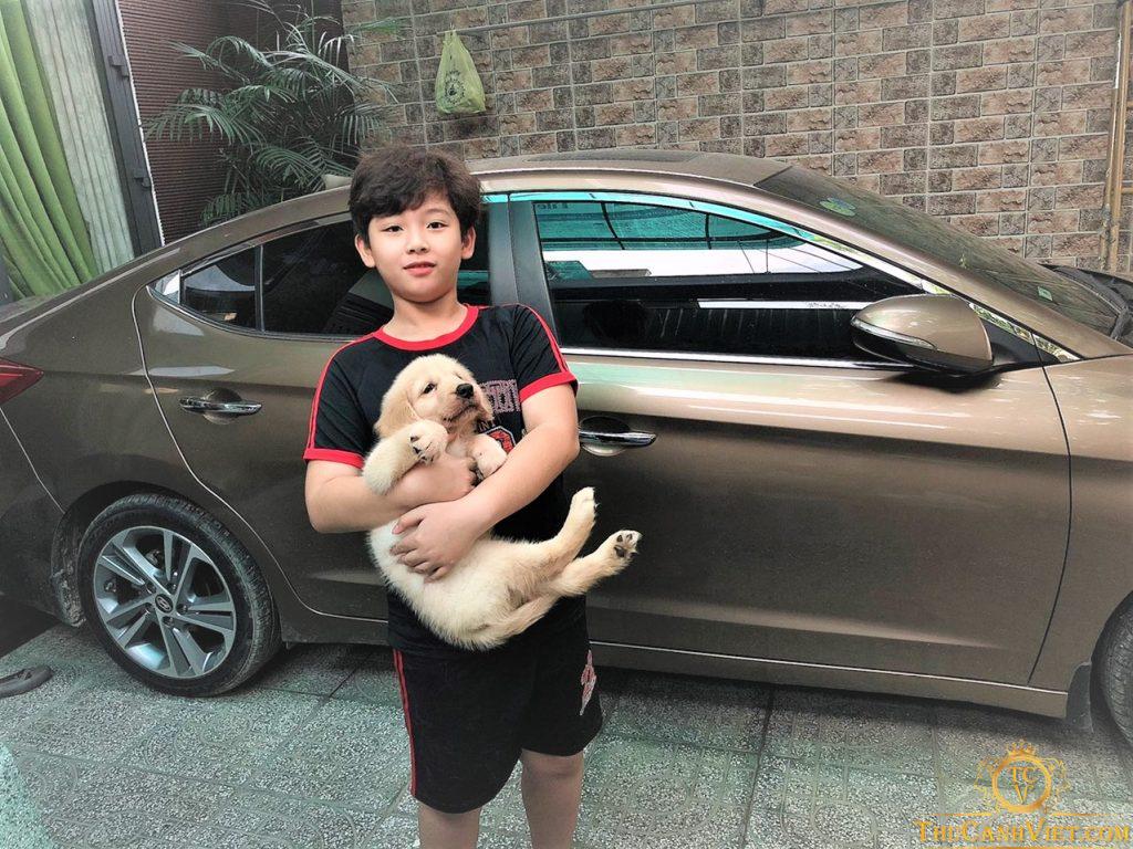 Chó golden màu vàng kim và cậu chủ Hotby đã mua hàng tại Thú Cảnh Việt