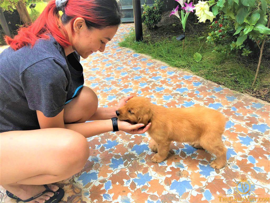 Con Gái Hoa Hậu Diệu Hoa mua chó golden vàng đậm tại Thú Cảnh Việt