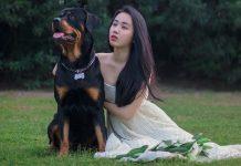 Chó Rottweiler và chô chủ nhỏ