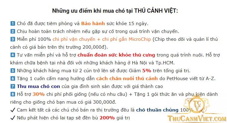 Ưu điểm khi mua chó Pitbull tại Thú Cảnh Việt