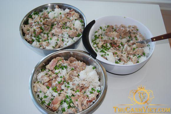Poodle 3 - 6 tháng tuổi ăn cơm nấu nhão