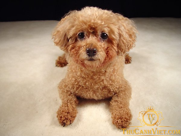 Tiny be bé trông cực đáng yêu