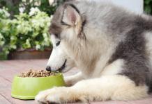 Thức ăn khô dạng hạt cho chó alaska