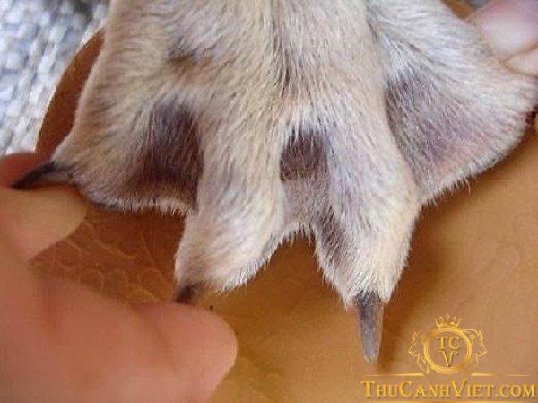 Chân chó có màng rất thú vị
