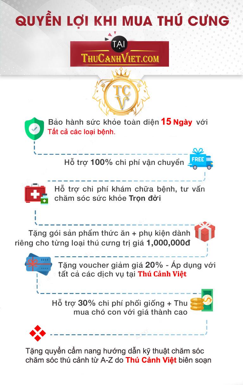 Quyền lợi khách hàng có được khi mua thú cưng tại Thú Cảnh Việt