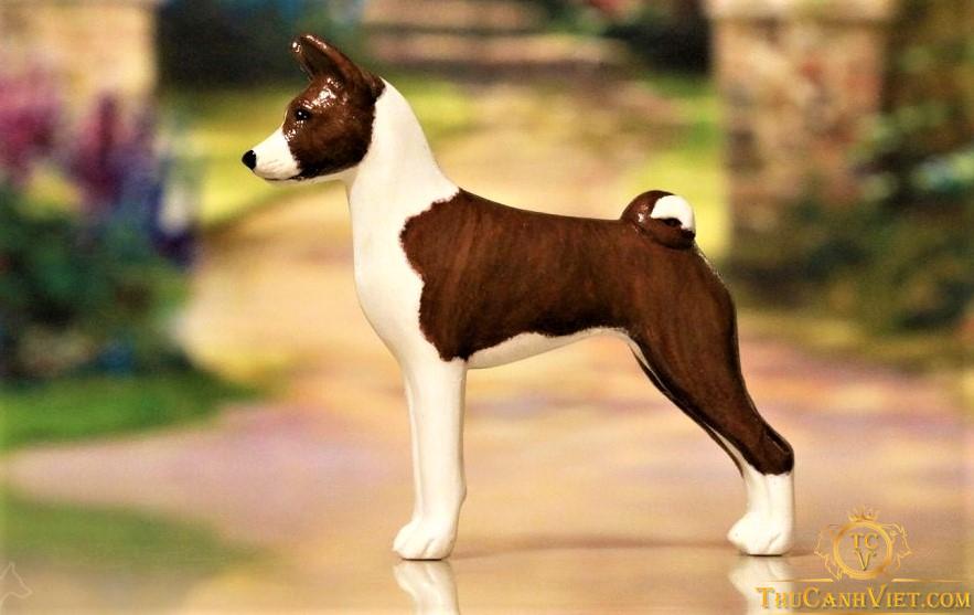 Chó Basenji màu nâu socola