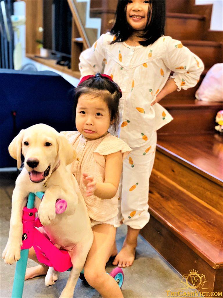 Labrador 3 tháng tuổi hợp tác chụp ảnh cùng cô chủ nhỏ hihi